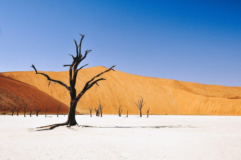 7 raisons de visiter la Namibie