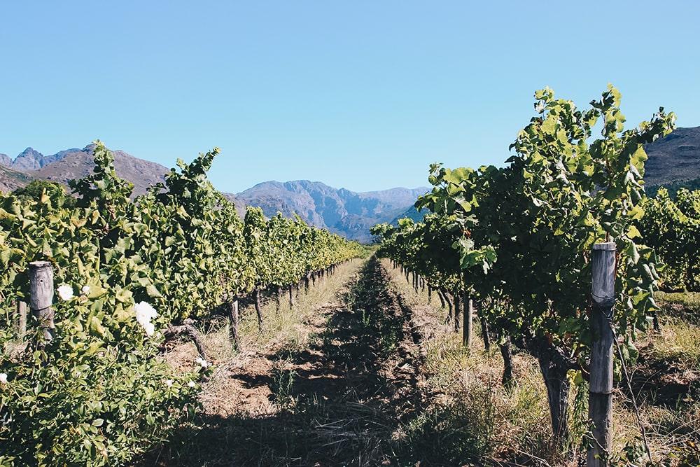 Parcourez la route des vins de Franschhoek à Stellenbosch
