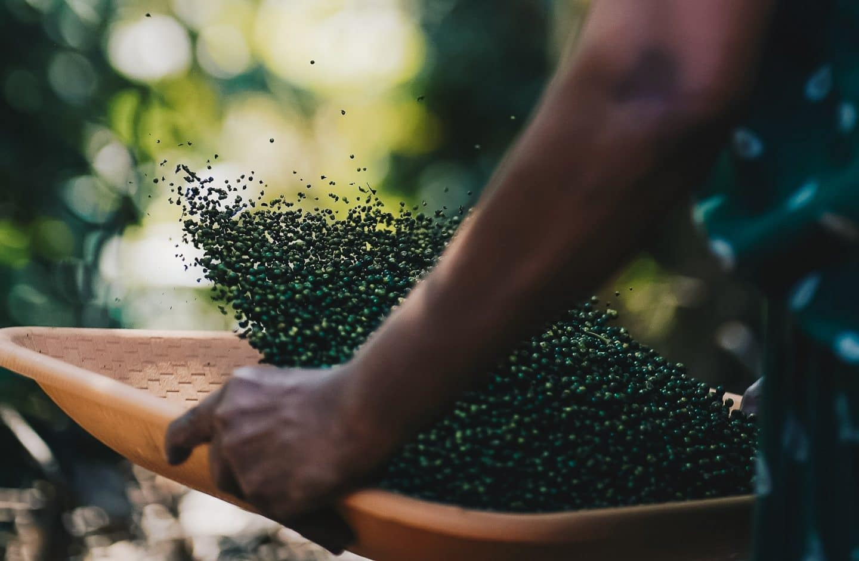 Les 9 épices de la cuisine indienne