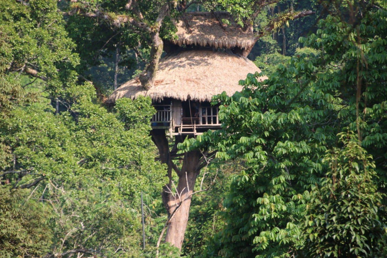 Gibbon experience: des sensations fortes en pleine jungle
