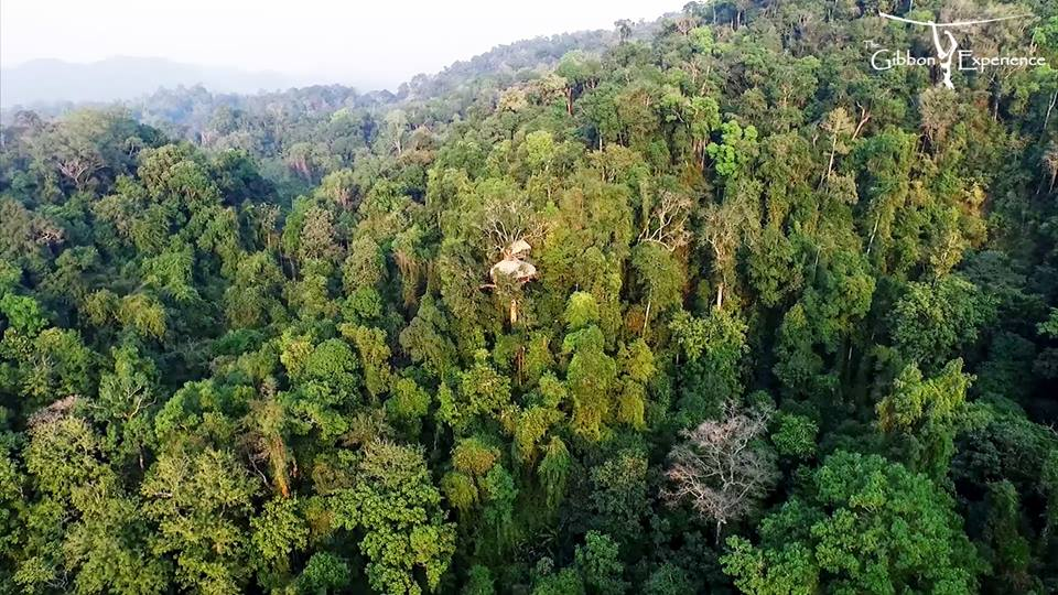 Laos-Gibbon expérience-Mademoiselle Voyage