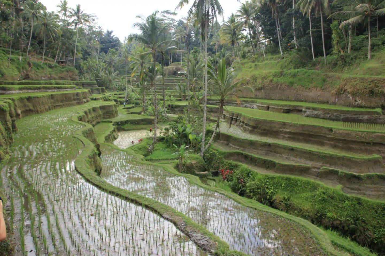 Bali: 9 choses à faire autour d'Ubud