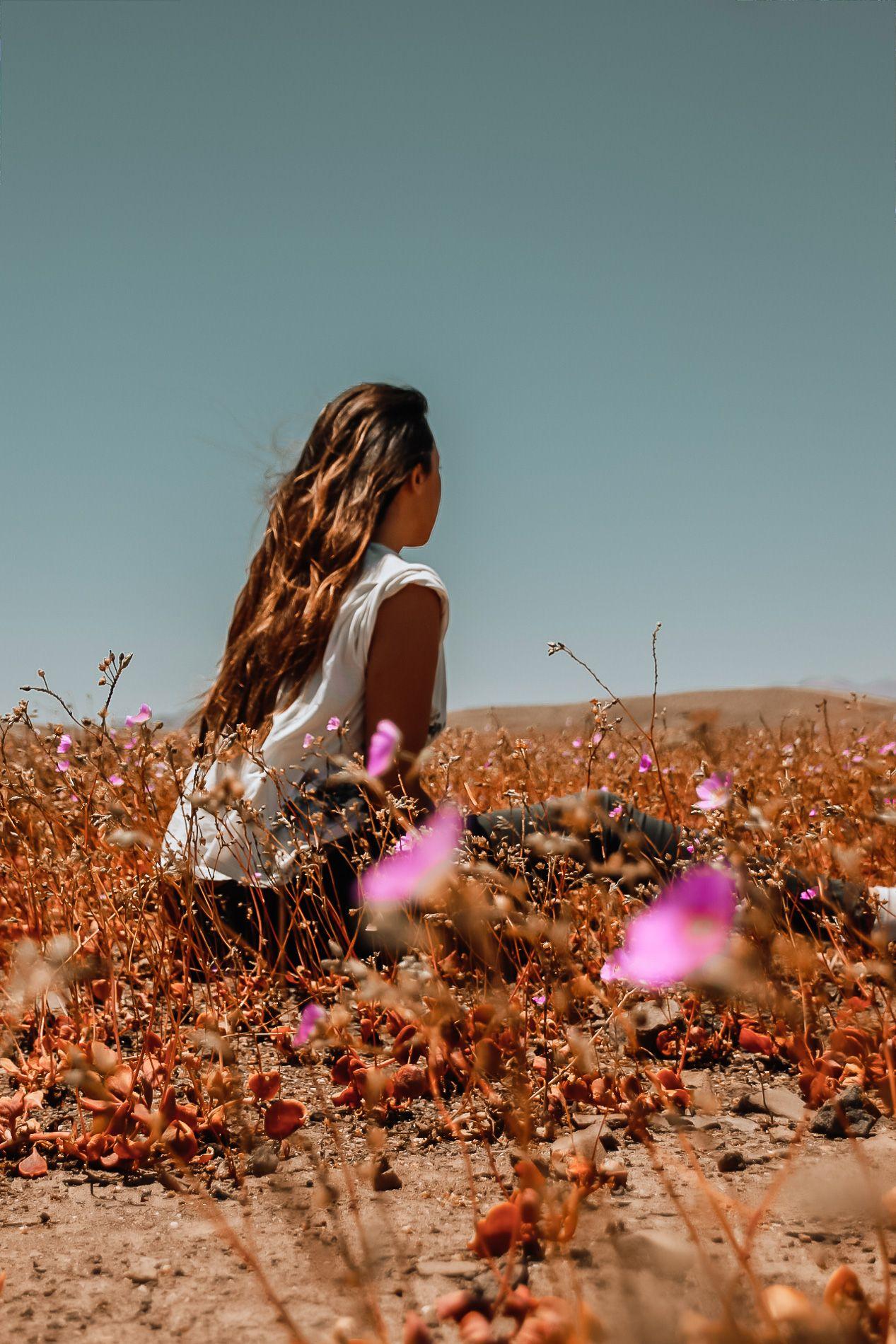 Insolite | Le désert d'Atacama en fleurs