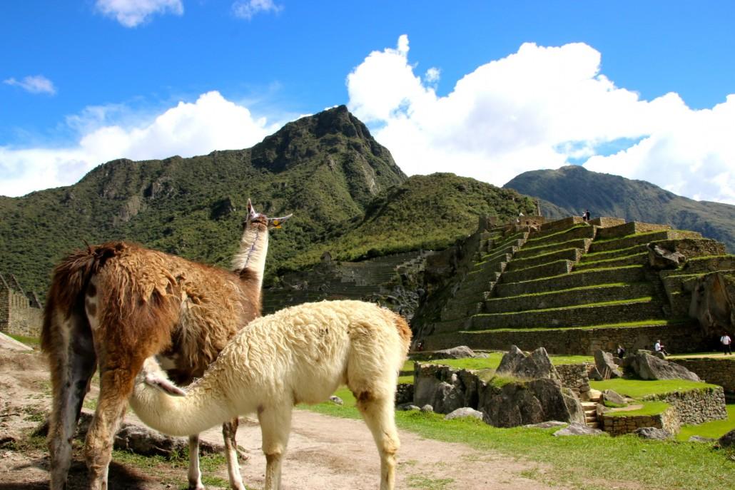 Perou_Mademoiselle voyage_Machu Picchu_37