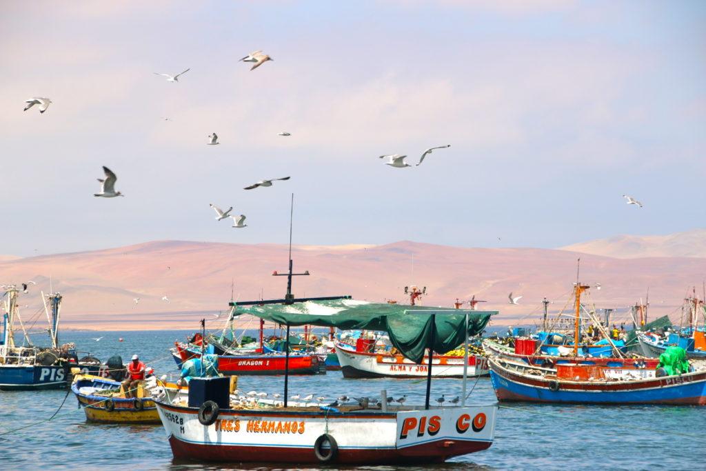 Paracas, 2 activités pour découvrir la réserve de Ballestas