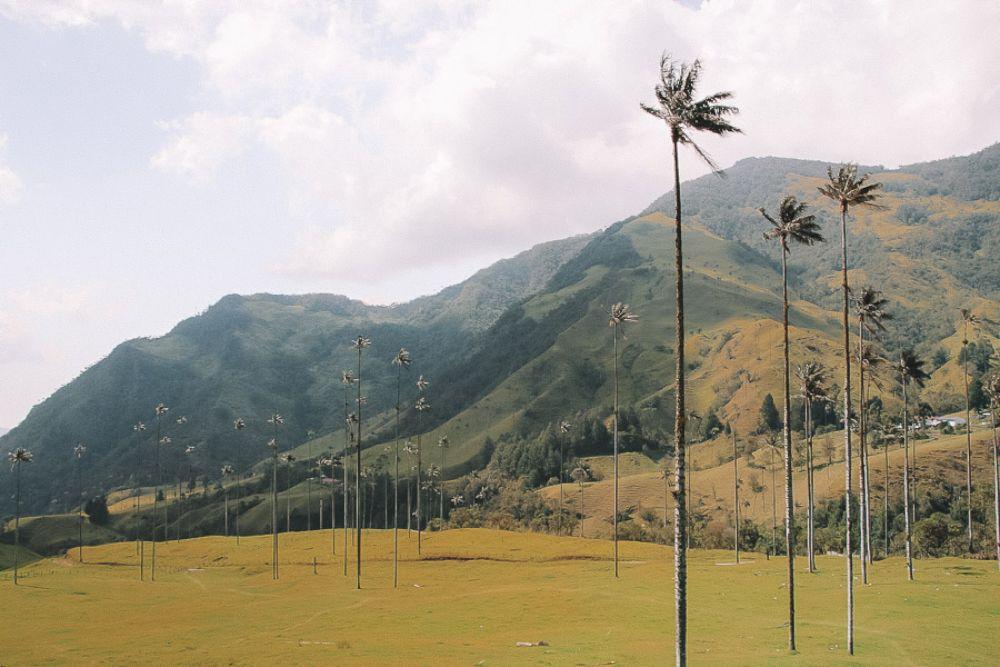 Salento   La vallée de Cocora   Villa de Leyva & Raquira