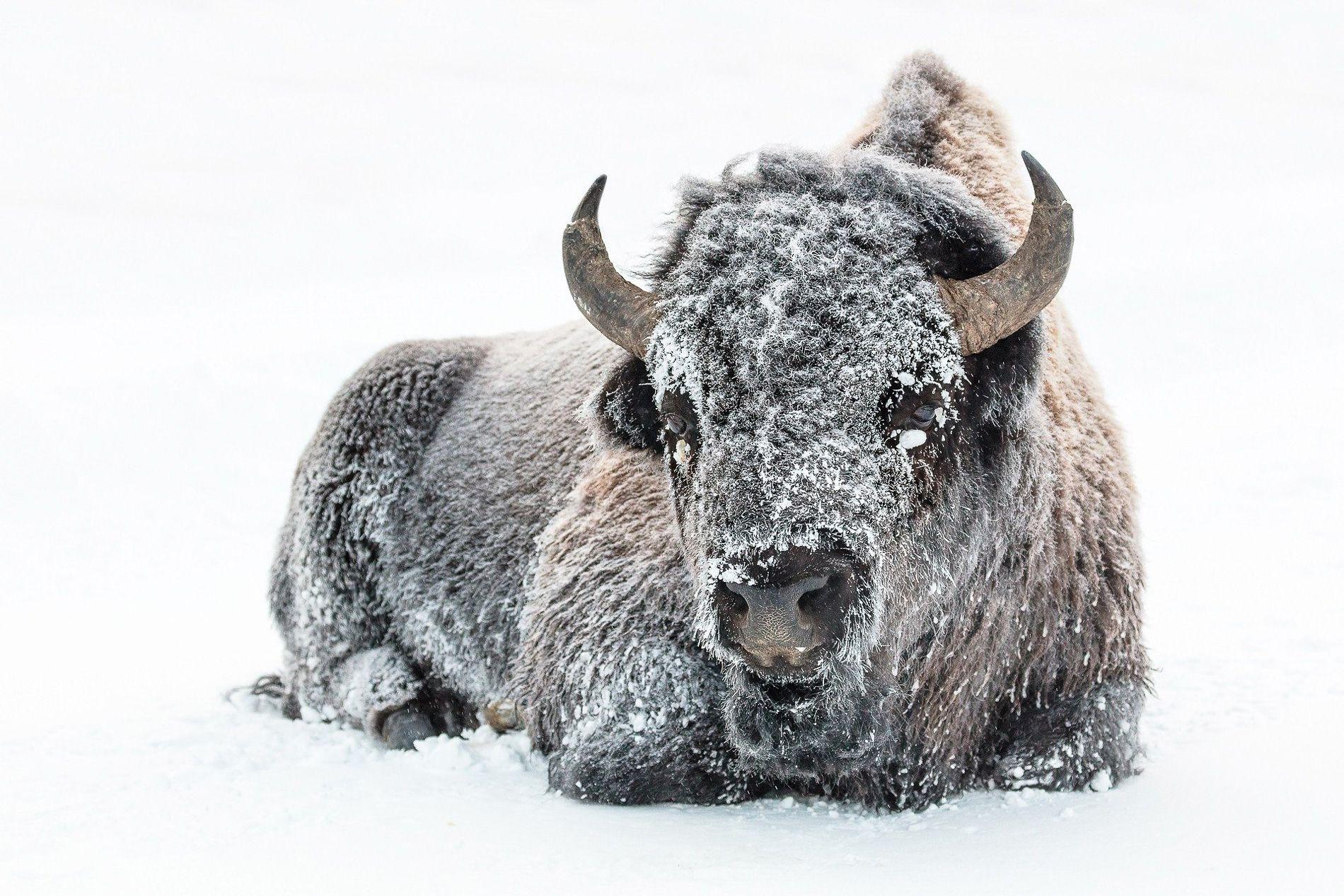 Alpes maritimes | conseils | voyage | monts d'azur | safari | animaux | mademoiselle-voyage