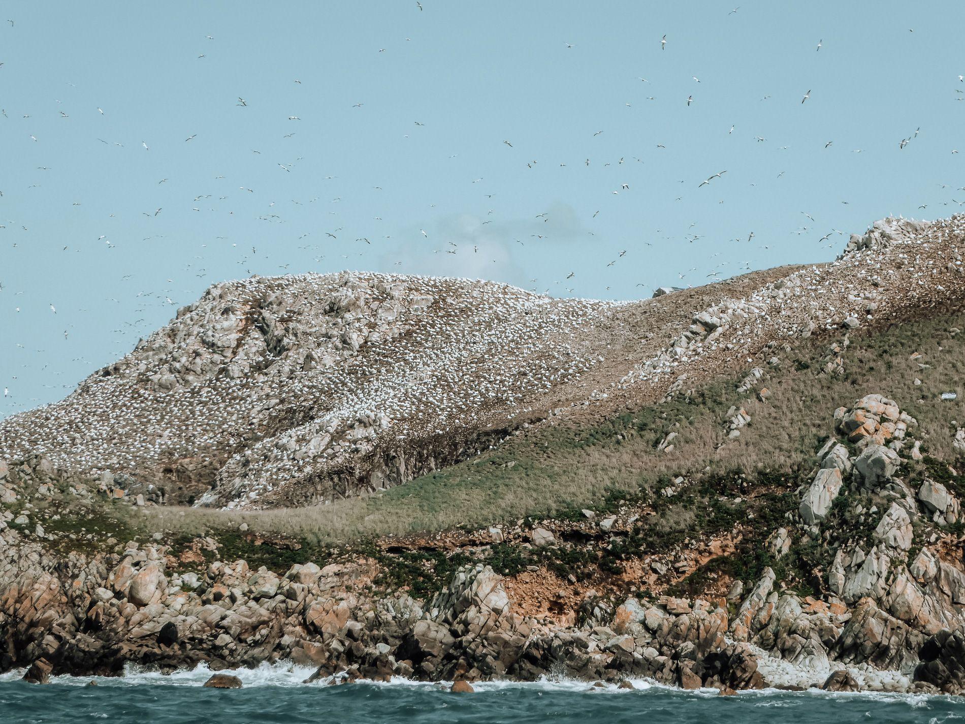 Bretagne - cote de granit rose - conseils - mademoiselle - voyage - blog - archipel - sept iles