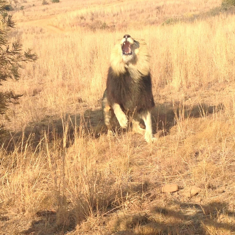 Volontariat en Afrique: soignez les animaux sauvages