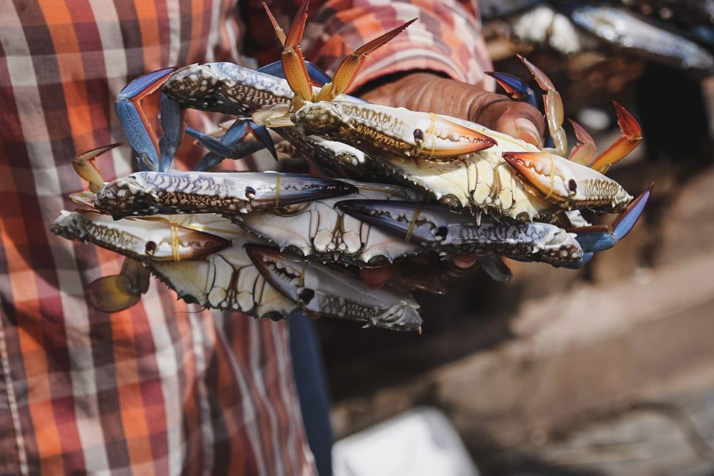 Cambodge | kep | marché aux crabes