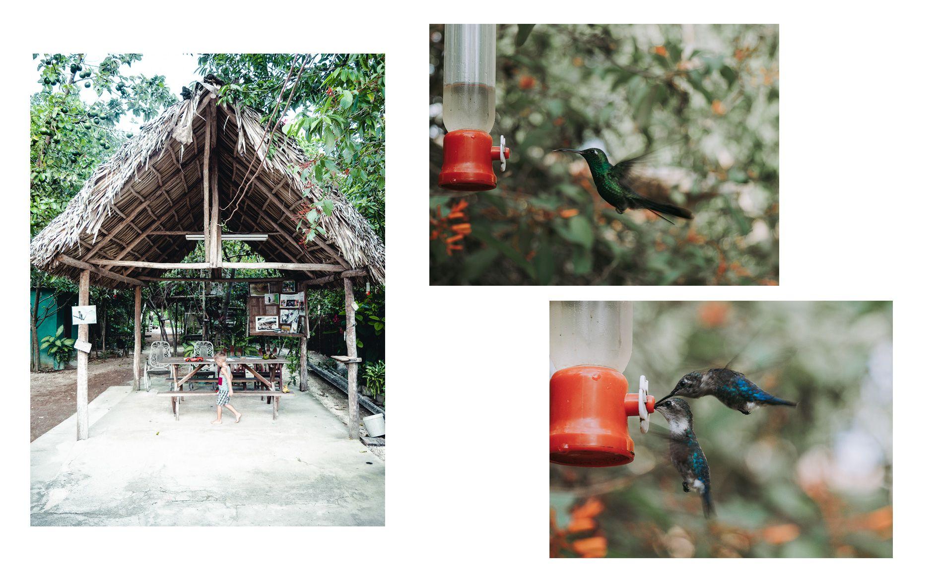 Cuba | carte | cienaga de zapata | maison des colibris | playa larga