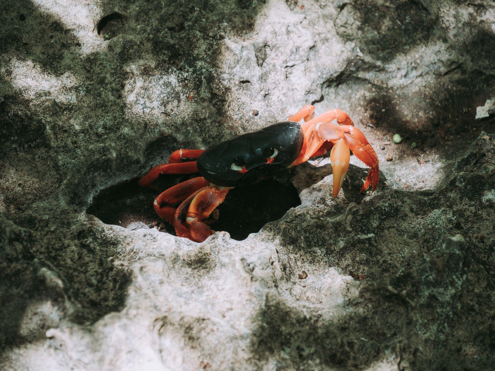 Cuba | carte | cienaga de zapata | enigma de las rocas | playa giron