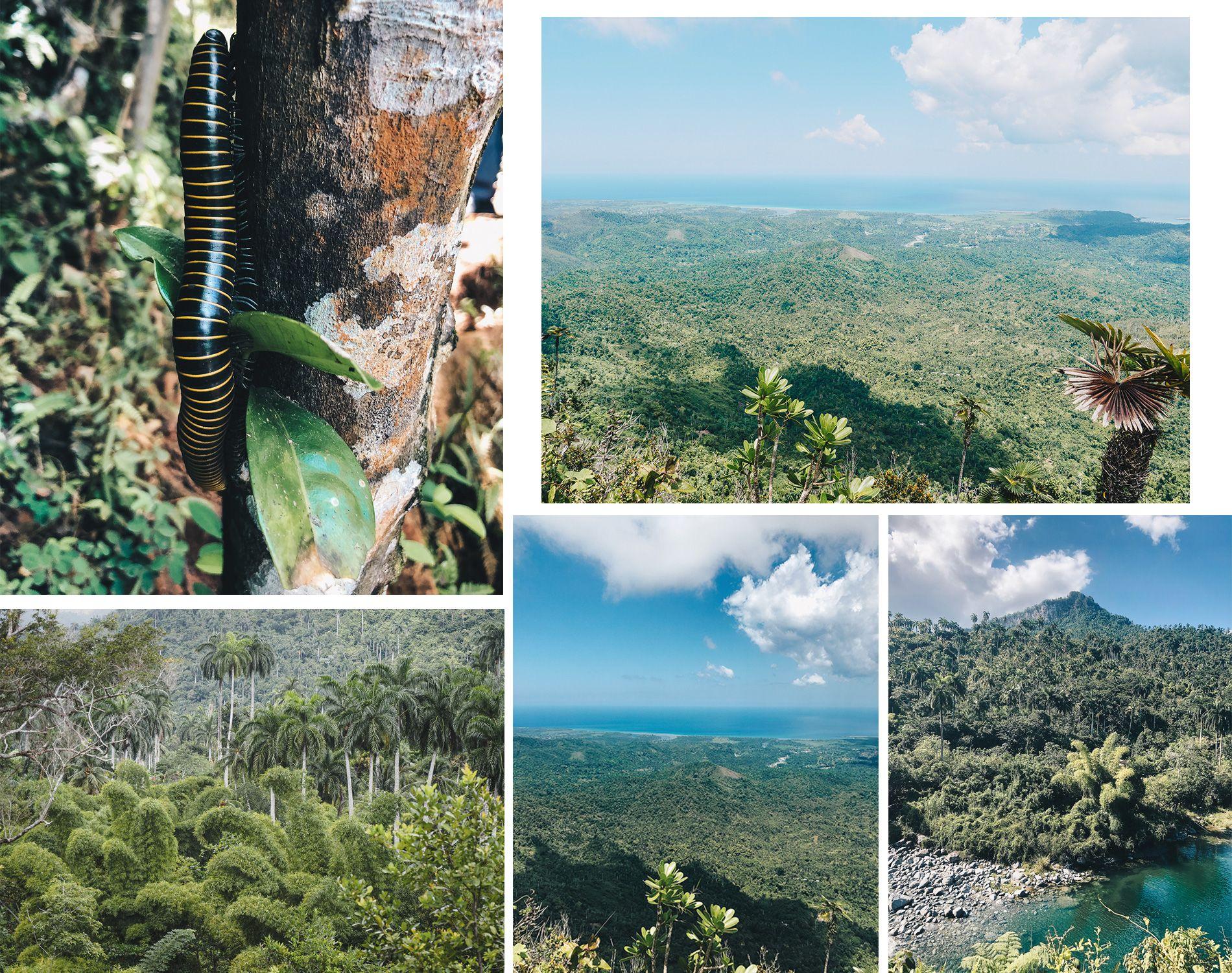 Cuba | Baracoa | Mont Yunque | Mille pattes |Trek