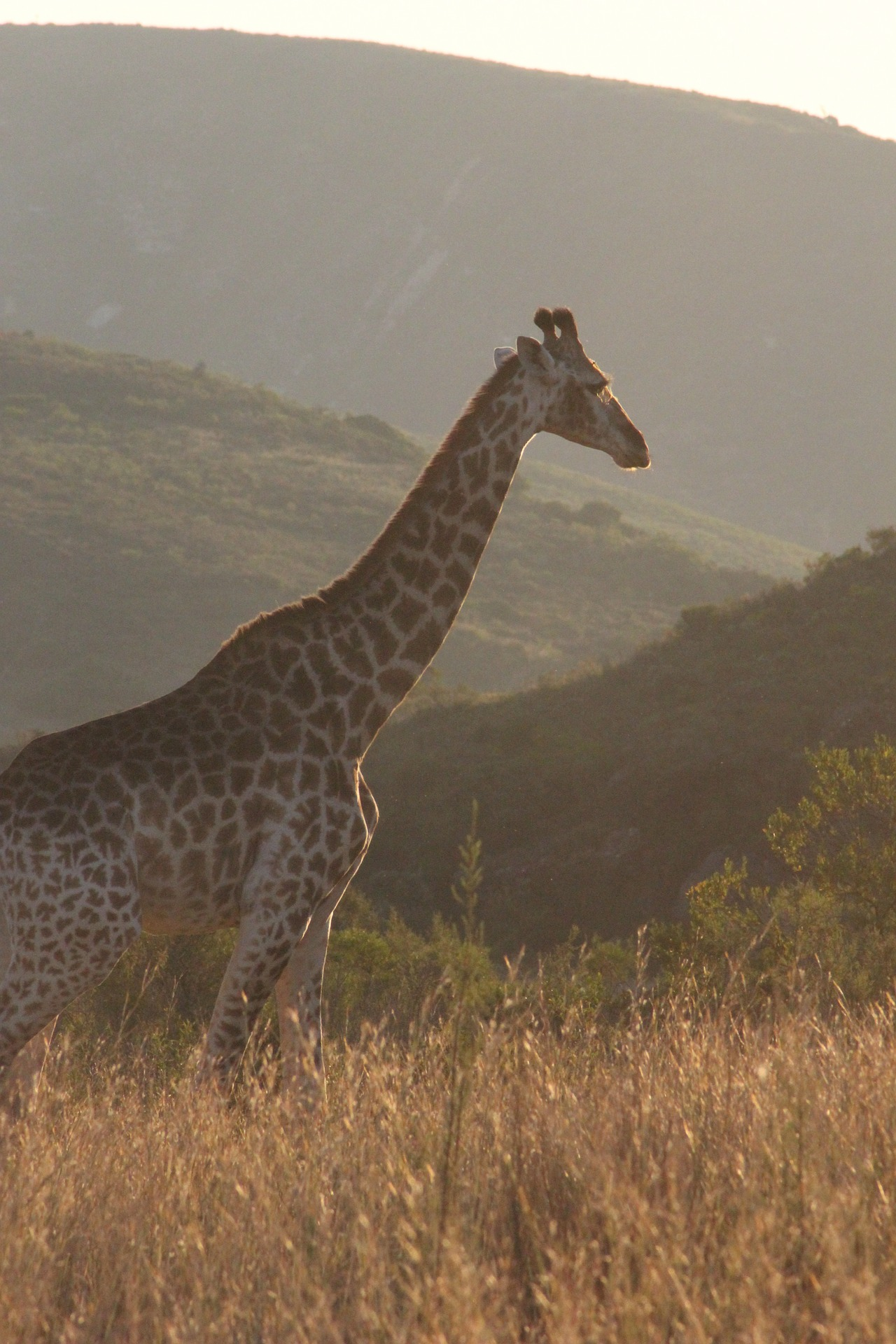 Afrique du sud | Le guide pratique pour organiser votre voyage